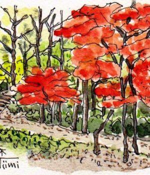 17330_高根の森