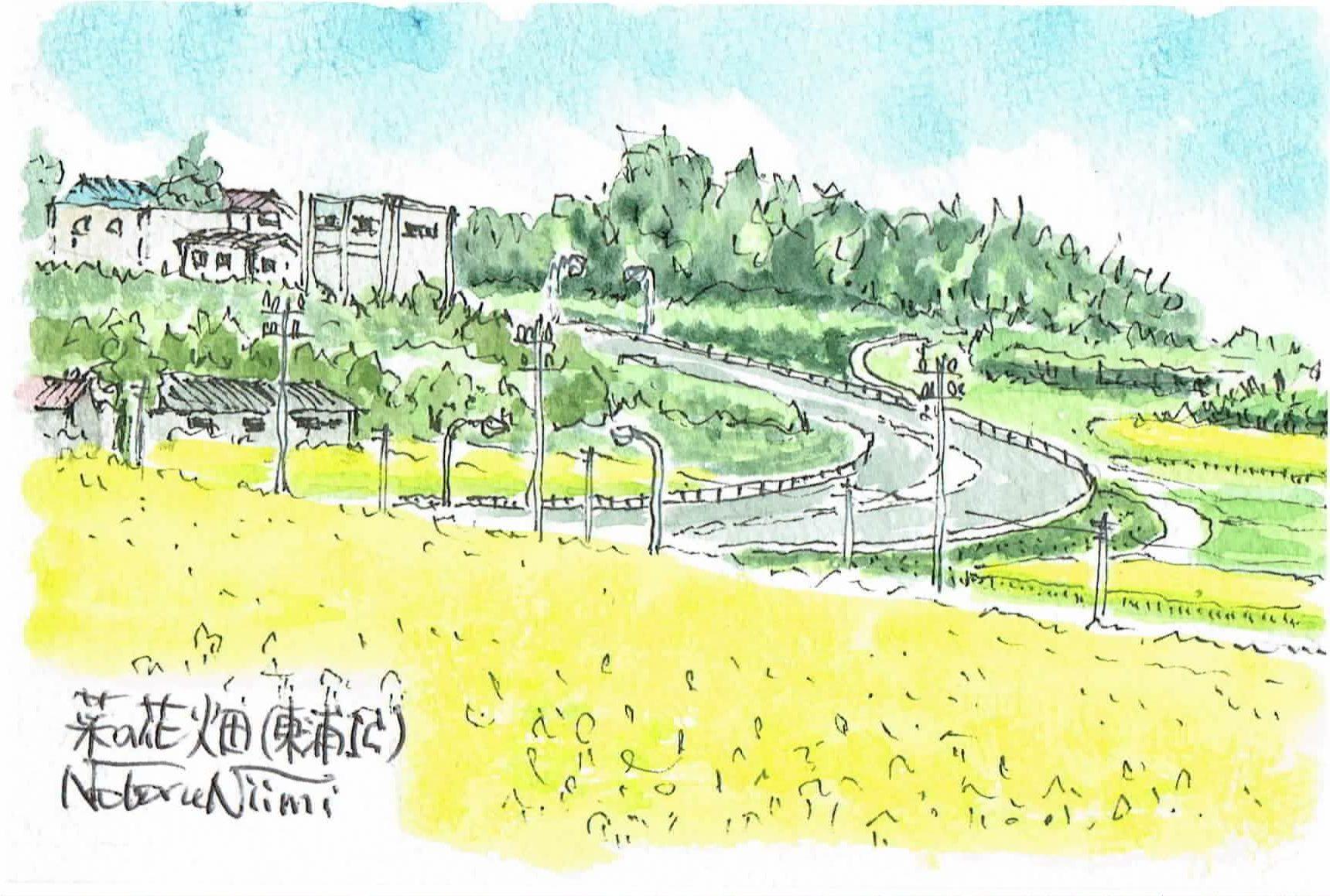 17335_東浦IC菜の花畑